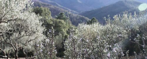 Produits de Provence, au coeur des Massif des Maures